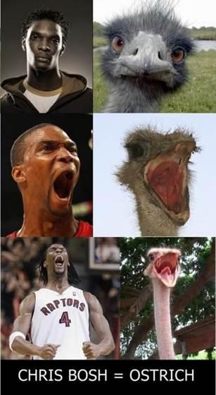 Bosh ostrich